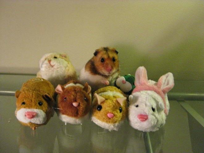 Hamster diantara boneka hamster
