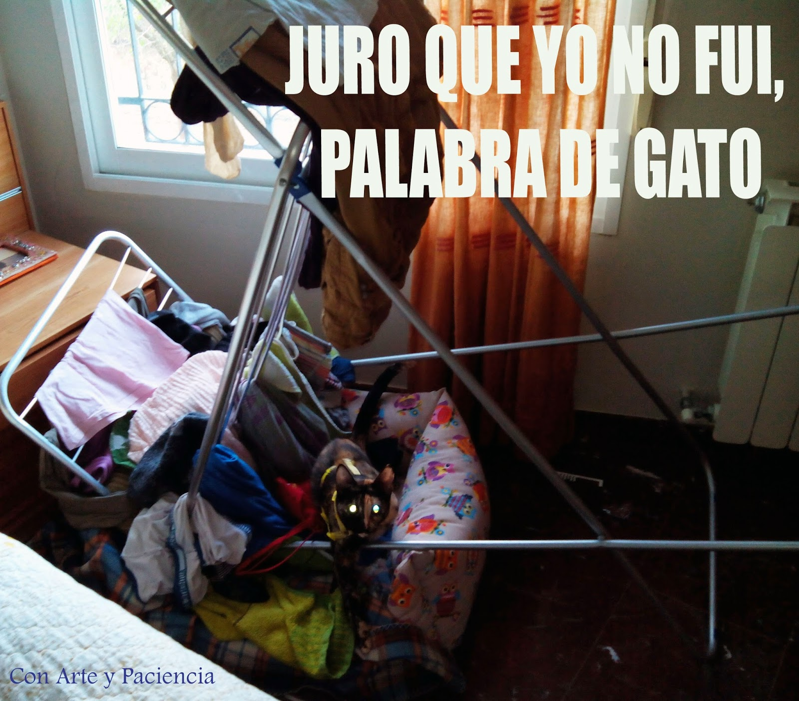 JURO QUE YO NO FUI, PALABRA DE GATO