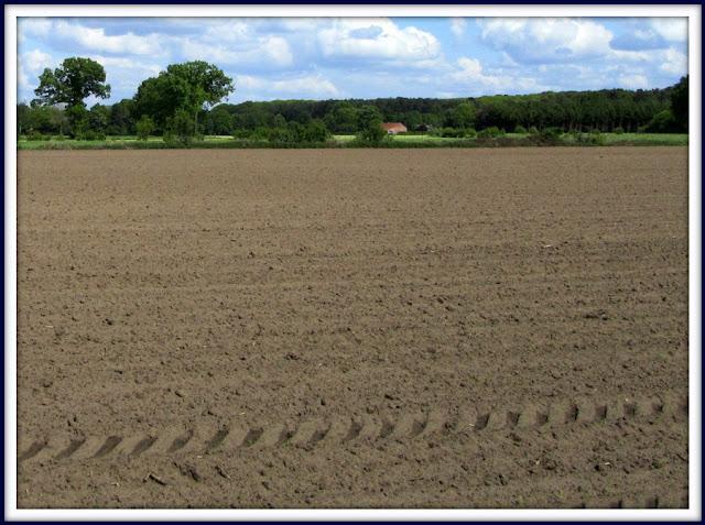 tractorbanden in het veld