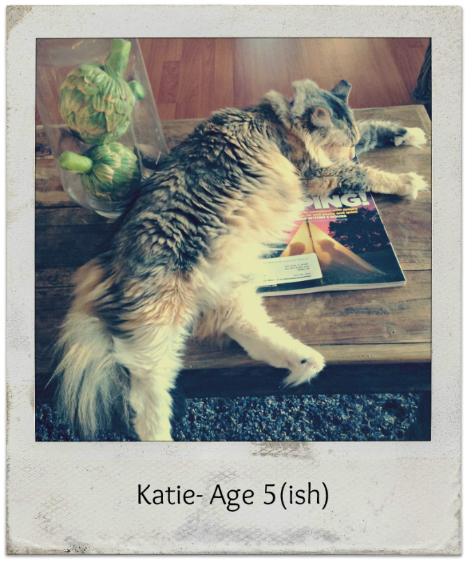 The Holland House: Katie