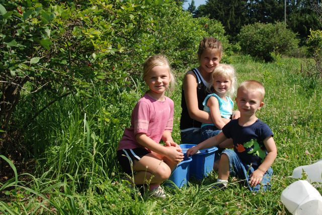 My kids and our friend out in the blueberry rows. Picking in the morning or on an overcast day is much more enjoyable because it is cooler. Take water for everyone, and enjoy the outing! We always pay at the farm market (owners) afterwards and grab our other produce for the week... and maybe some other treats!