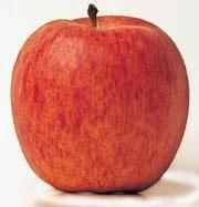Јабука Гала
