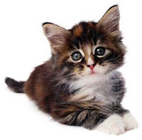 Most Popular Best Pets In The World - Cats