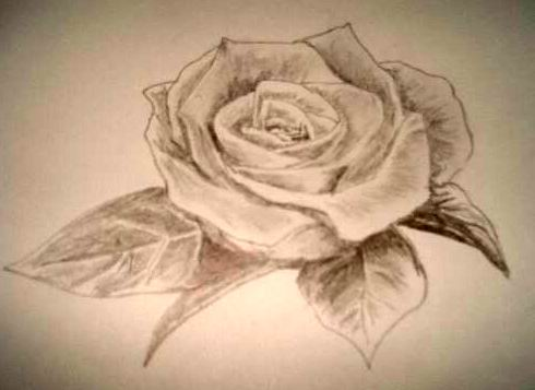 Most beautiful drawing in the world how to draw beautiful for Pretty rose drawings