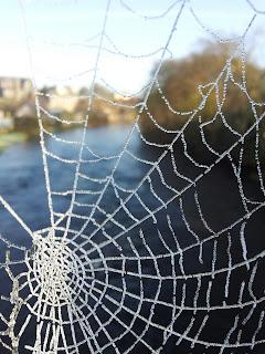 spiritual photo, spider web, spirituality, spiritual awakening