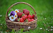 Fondos de Frutas: Canasta con Fresas y Flores en la Hierba canasta con fresas flores en la hierba fondos de pantalla de frutas