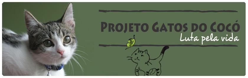 Gatos do Cocó - Luta pela vida!