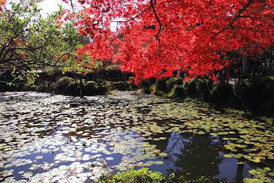 Lago cubierto de hojas