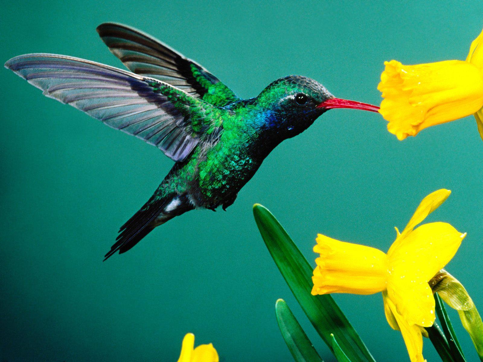 http://3.bp.blogspot.com/-1F-TGOTAFy4/T7E_eoa4A1I/AAAAAAAAGd4/udI86T-7N4E/s1600/Birds-Wallpaper1.jpg