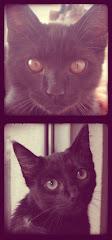 Sr. Loki & Sr. Kira