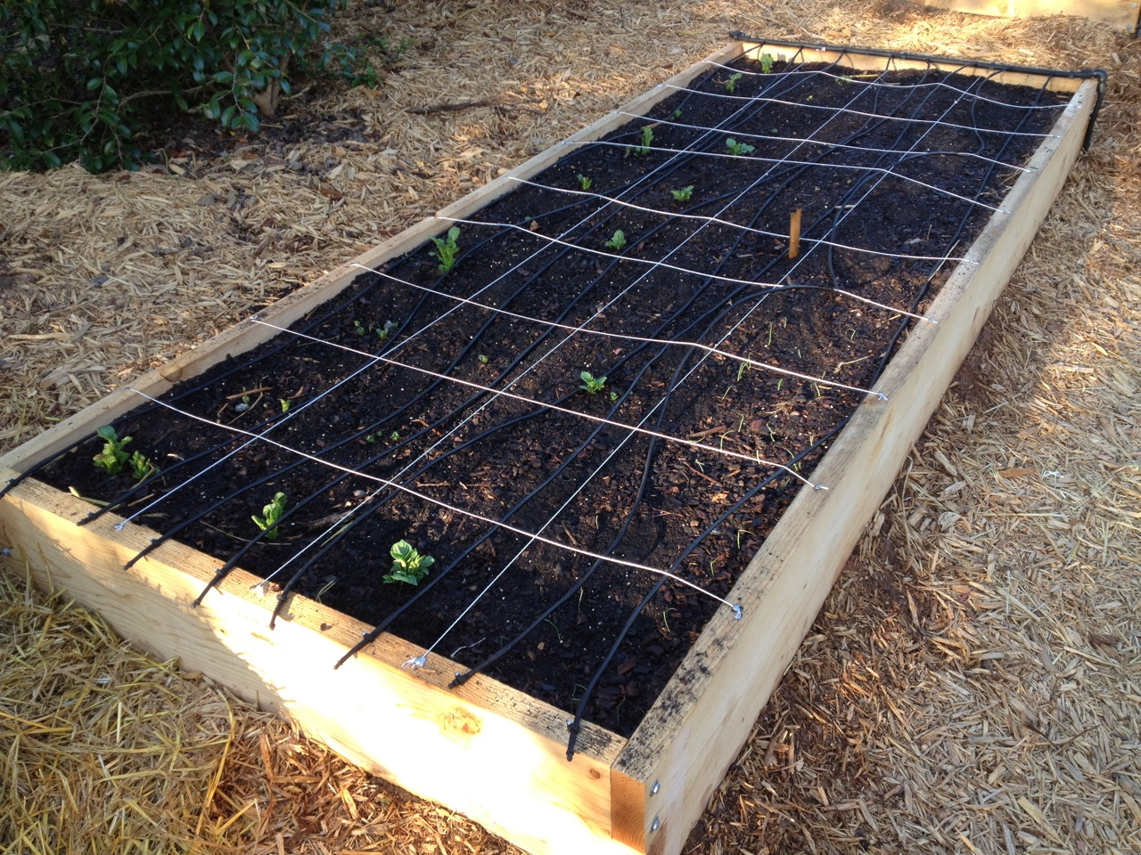 Applying Learnings To A New Vegetable Garden