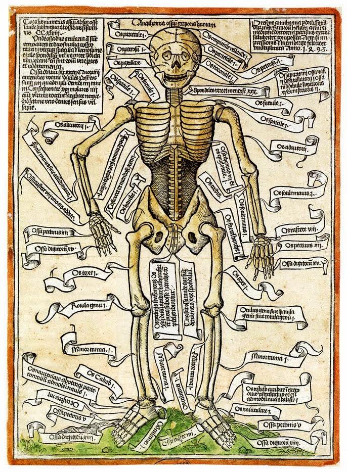 Skeleton printed in Nuremberg in 1493