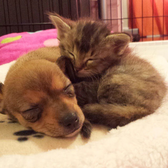 stray kitten abandoned puppy adele and chip-11