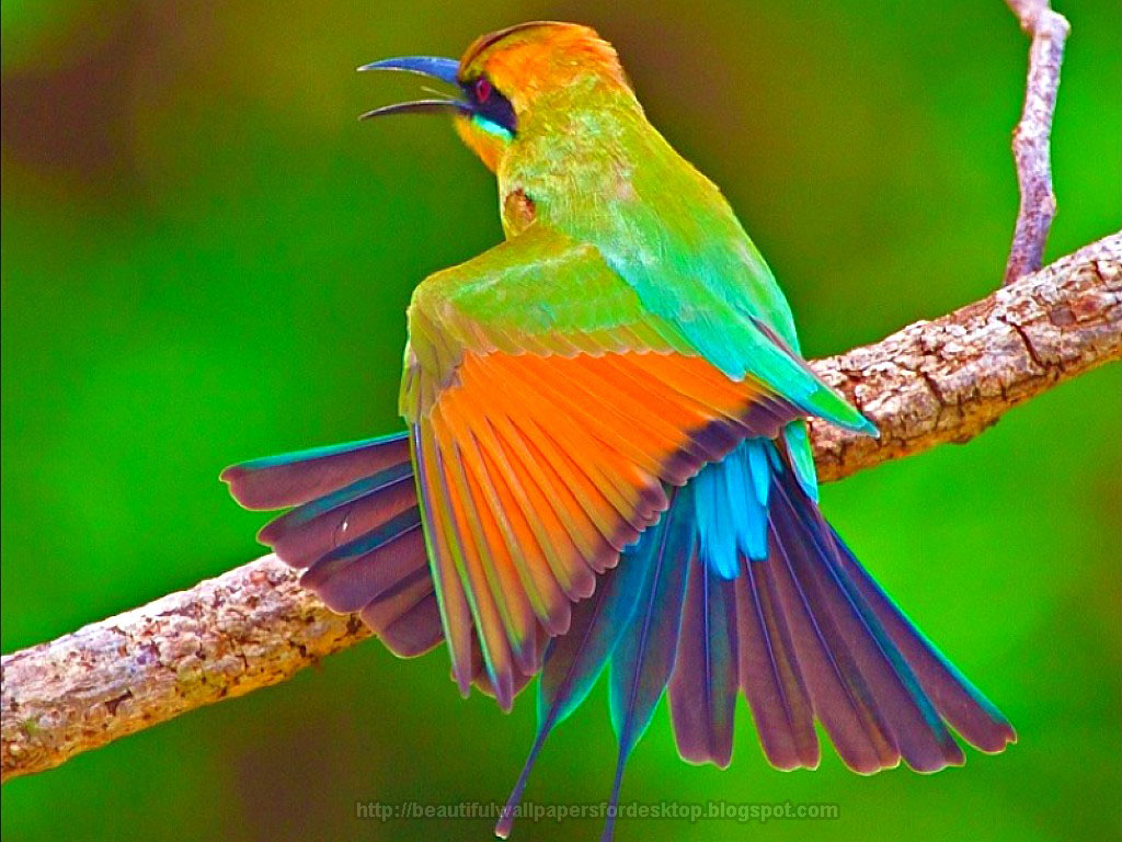 desktop hd wallpapers beautiful birds hd wallpapers
