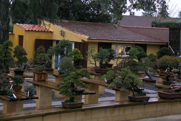la belleza del bonsai cuidado de plantas revista de cuidado de jardines y plantas. Black Bedroom Furniture Sets. Home Design Ideas