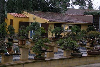 Junio 2011 cuidado de plantas revista de cuidado de jardines y plantas - Cultivo del bonsai ...