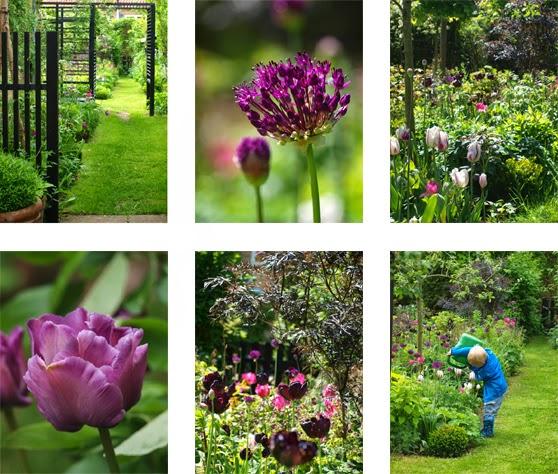 Haven i forsommeren hvor tulipaner står stærkt og farverne er intense