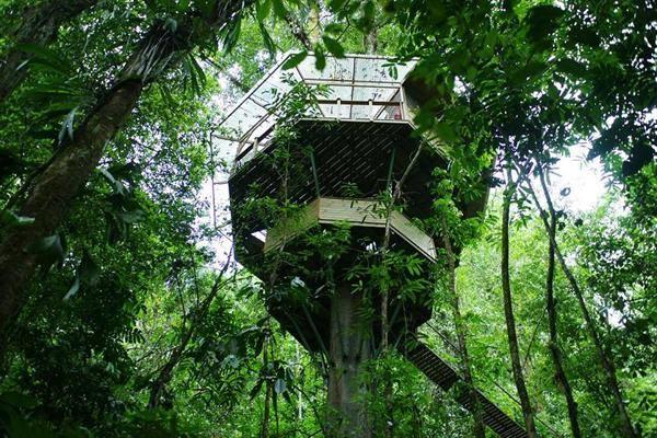 Desain Rumah Diatas Pohon