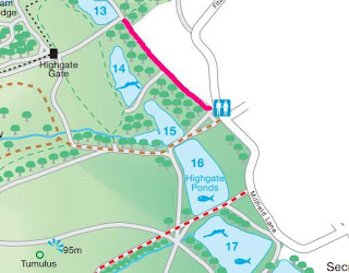 a section of a map of Hampstead Heath showing the ladies' pond, with the path to the pond highlighted in bright pink. The pond itself is labelled '14' hence my reference to the number 14 in the last paragraph.