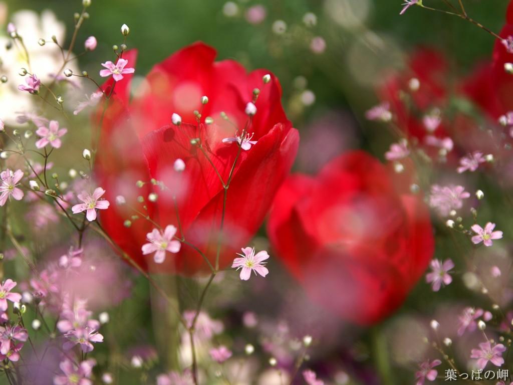 http://3.bp.blogspot.com/-1Fn8Q3PgqgQ/TwoEFEx2JII/AAAAAAAAATo/Iuh0C-Gb6nk/s1600/red-rose-wallpaper.jpg