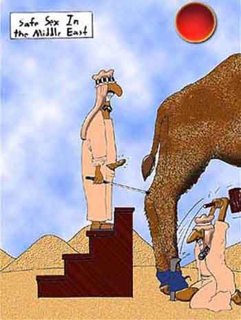 humor cartoon camel sex