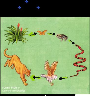 como se les denomina a los animales que: