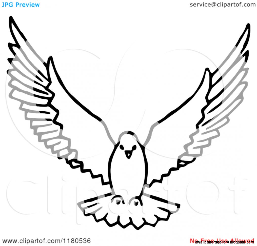Flying Dove Drawing | Wallpapers Gallery