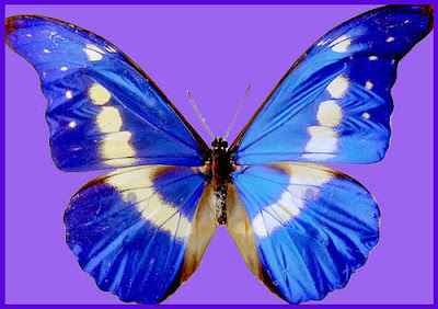 Blogfull, Butterfly