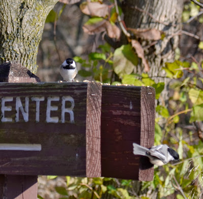 pair of black-capped chickadees on nature center sign