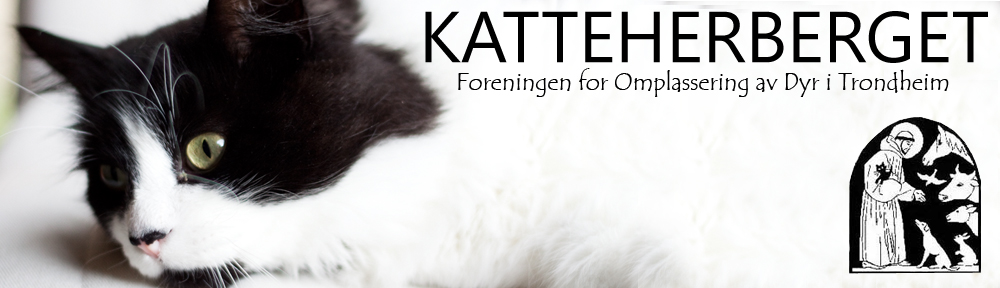 KATTEHERBERGET