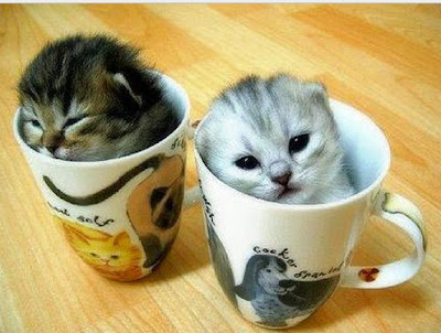Tumblr-funny-cat