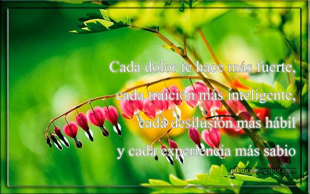 Cada dolor ~ Imagen con frase  ~ Flores macro