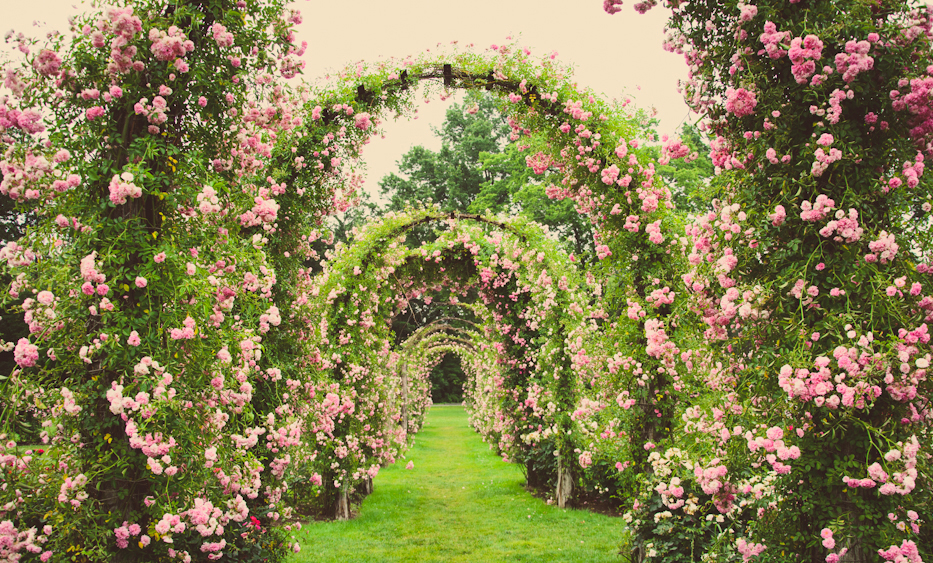 Large Garden Full Of Roses 11 Best Romantic Places For Couples In Delhi Famous Places