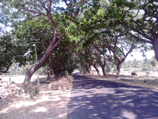 State Highway, Melukote