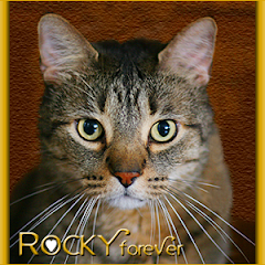 Rocky  RIP