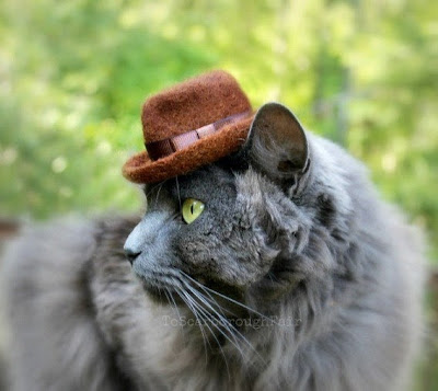 Indiana Jones Fedora Cat Hat