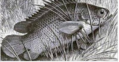 Mẹo chữa hóc xương cá trong dân gian rất hiệu nghiệm