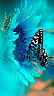 Aqua Butterfly Picture