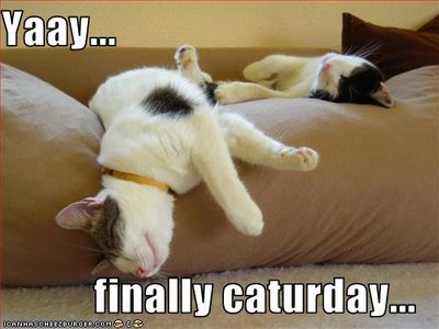 Image result for caturday images
