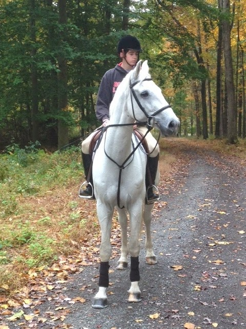Equestrian Blog Of The Day - A Work In Progress: One Middle-Aged Broad's Descent Back Into Horse Madness!