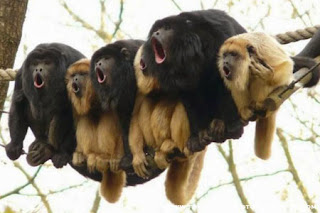 Funny Animals doing some more Fun