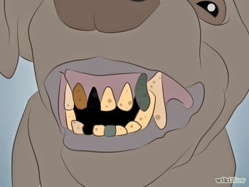 Hình 7: khi chó già răng sẽ mòn đáng kể
