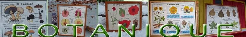 Affiches scolaires Botanique