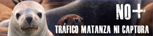 Alerta: matanza de lobos marinos propugnada por merca$$hifles que nos (des)gobiernan