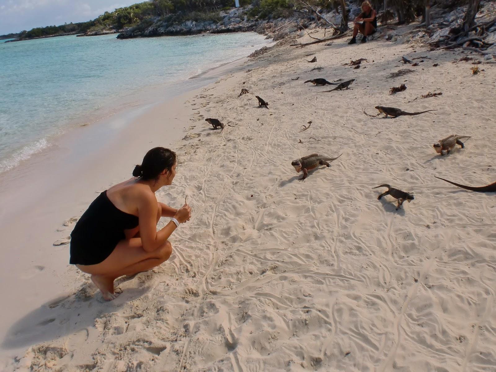 Due vite in viaggio il bagno con gli squali - Bagno con gli squali sudafrica ...