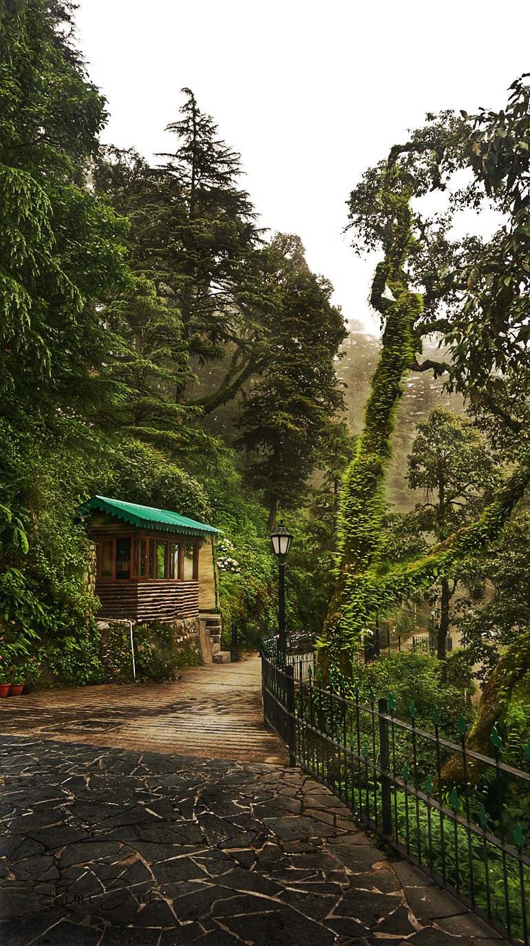 #Himalayas #Mussoorie #India #Green #Photography #Landscape #SimijoisPhotography