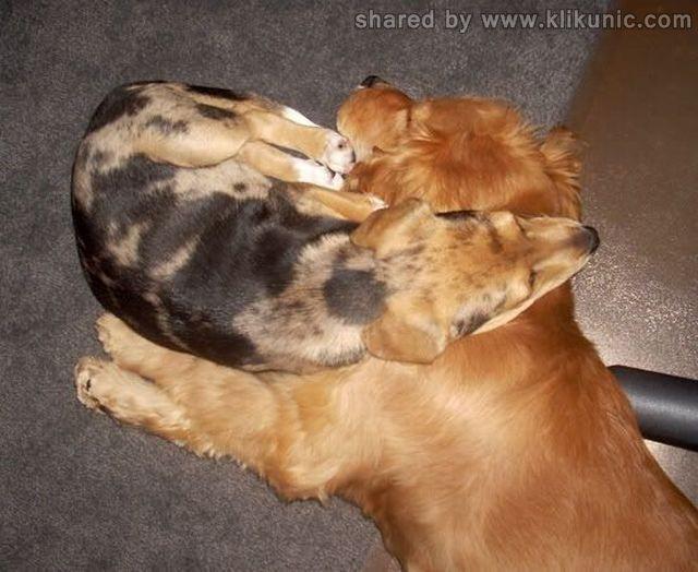 http://3.bp.blogspot.com/-1K2G_jMux-s/TXhLTTb_PLI/AAAAAAAAQiY/W68tuxhrW4U/s1600/these_funny_animals_632_640_39.jpg