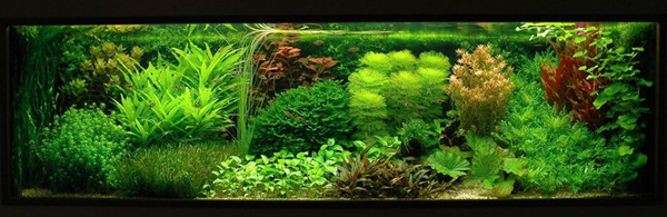 Cham soc ho thuy sinh: Art of Aquascaping: Which Style Fits You?