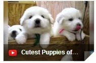top ten cutest puppies, cutest puppies in the world