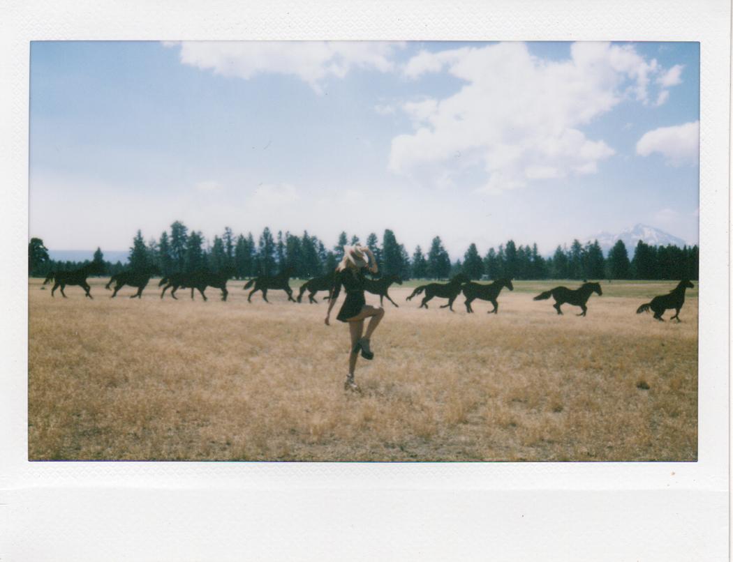 gambar binatang - foto foto kuda